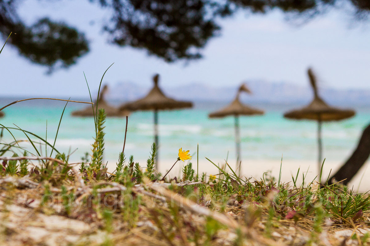 Strandfoto Mallorca